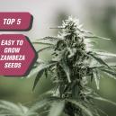 Top 5 Easy-to-Grow Seeds From Zambeza