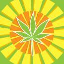 Top 5 Feminized Cannabis Strains for Warmer Climates