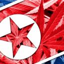 Cannabis in North Korea
